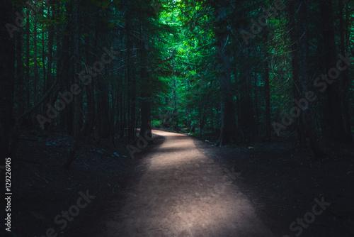 Fotografie, Obraz  Dark forest trail.
