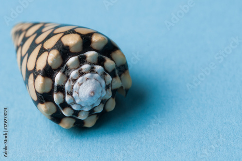 Fotografía isolated shell on blue background