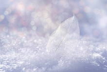 White Transparent Skeleton Leaf On Snow Outdoors In Winter. Beautiful Texture, Sparkling Round Glistens Bokeh Blue Pink. Gentle Romantic Artistic Image, Christmas And New Year, Close-up Macro.