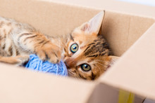 Portrait Of A Kitten With A Ball From The Box Closeup