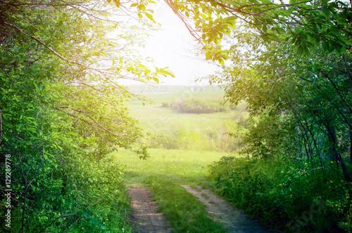 Foto op Plexiglas Landschappen Path in green forest