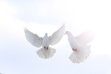 Pair Of White Doves Flying In ...