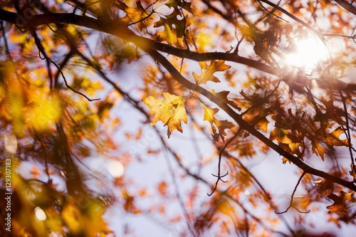 Trees during autumn Canvas Print