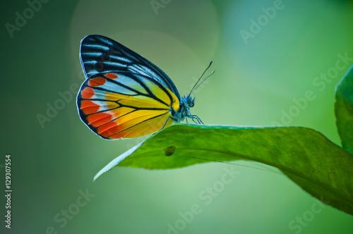 Keuken foto achterwand Vlinder butterfly