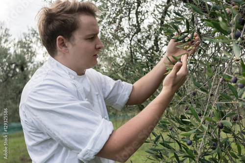 Tuinposter Olijfboom Chef inspecting quality of olive fruit on the tree in plantation
