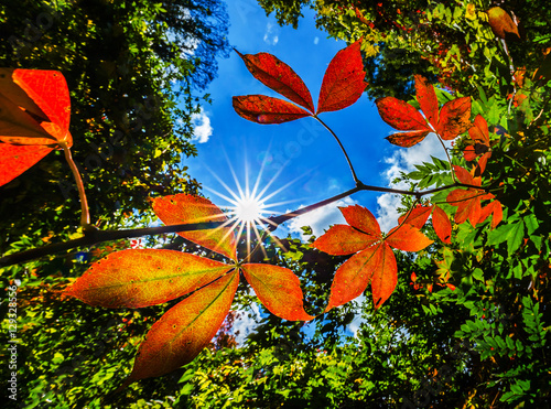 Fotografie, Obraz  Vibrant autumn colors on a sunny day in the forest, with bright colored tree top