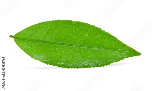 Fototapety, obrazy: leaves green tea with drops of water isolated on white backgroun