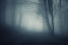 Dark Forest Path In Fog