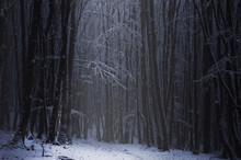Dark Forest In Winter