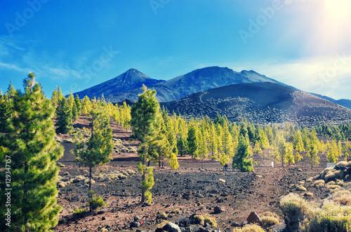 Fotografia  Volcano El Teide, Tenerife National Park
