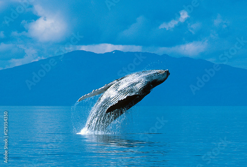 Photo Humpback whale breaching