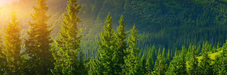 Fototapeta Las Forest