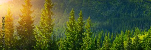 Montage in der Fensternische Wald Forest