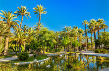 Palmeral Of Elche, Spain. UNES...