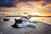 Black And White Cat Lying Unde...