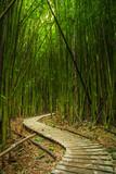Fototapeta Bamboo - Maui Bamboo Forrest