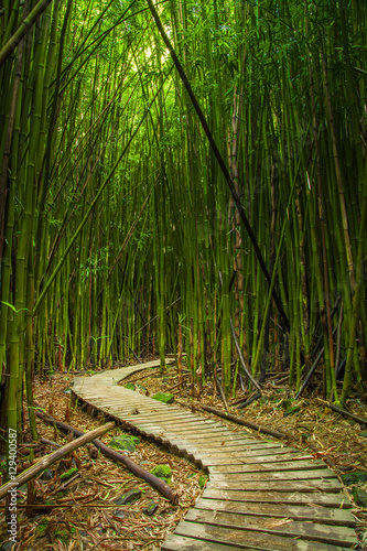 Poster Bamboe Maui Bamboo Forrest