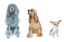 Three Dogs Isolated Image