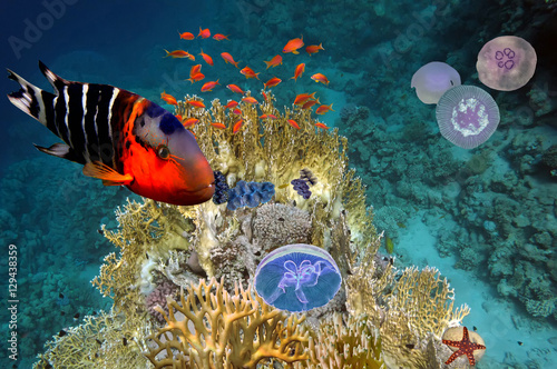 Photo  Underwater scene, showing different colorful fishes swimming