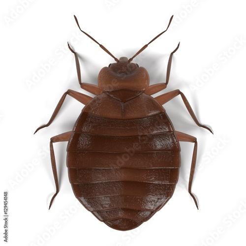 realistic 3d render of bedbug Fotobehang