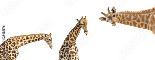 Foto op Aluminium Giraffe Set of three photos of upper half giraffe body isolated on white