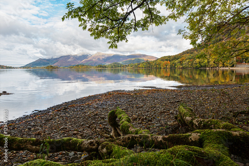 Fotografie, Obraz  Mossy Tree Roots on the Shore of Derwent Water in Autumn