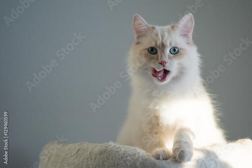 Photo  Katze im Angriff