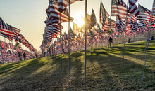 Many US American Flags Flying,...