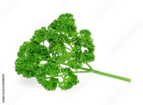 Curly Parsley Isolated on White Background