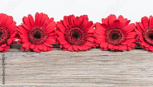 Foto op Canvas Gerbera Red Gerbera Daisy flowers border.