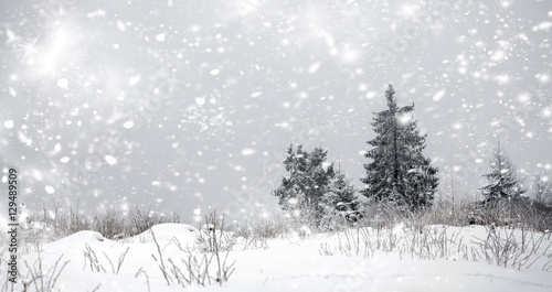 Christmas background with snowy fir trees Wallpaper Mural