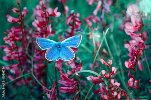 Spoed Foto op Canvas Natuur Butterfly