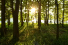 Silhouette Of Sunlight In The Green Forest With Zoom Effect Blur Background