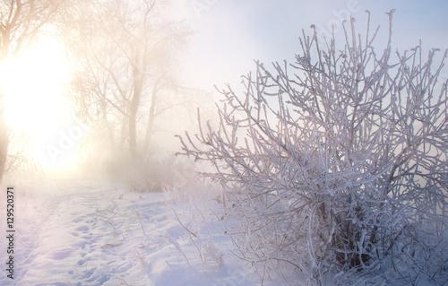 Fototapeten Natur Winter landscape. The sun shines in the photo camera. the trees