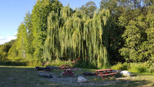 Picnic Area Beside A Beautiful Weeping Willow