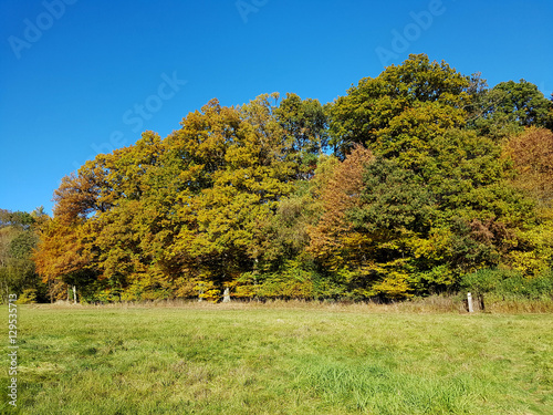 Eichenwald Herbst Eichenblaetter Quercus Robur Buy This Stock