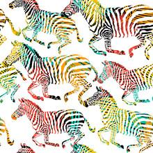 Zebra Tropic Animal In The Jun...