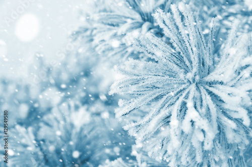 Foto op Canvas Paardebloemen en water Winter landscape with pine branches in the frost and snow