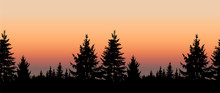 Seamless Landscape. Silhouette Of Coniferous Trees On The Background Of Colorful Sky. Sunset.