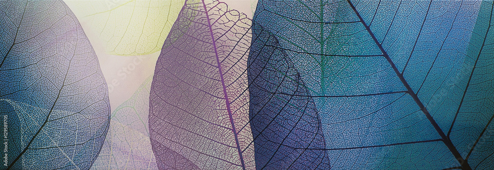 Fototapeta tile, transparent leaves