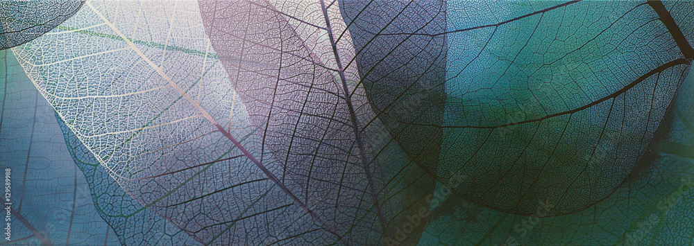 tile, transparent leaves