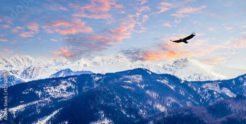 Cadres-photo bureau Aigle Winter mountains panorama of Zakopane, High Tatra Mountains, Poland