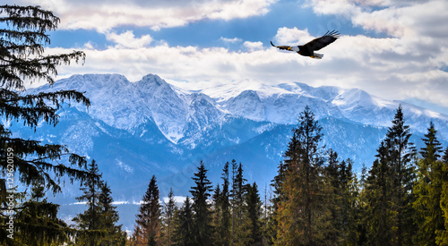 Photo sur Aluminium Aigle Winter mountains panorama of Zakopane, High Tatra Mountains, Poland