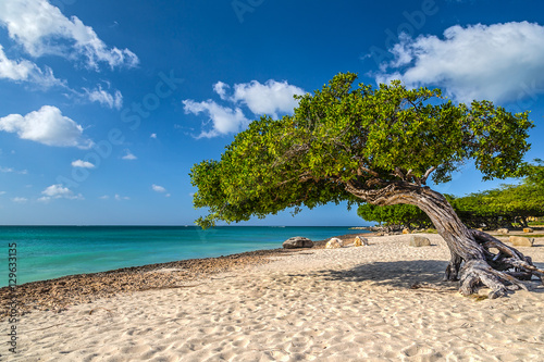 Divi Tree By The Sea фототапет