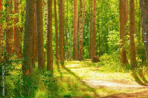Wall Murals Forest forest on the shore of lake