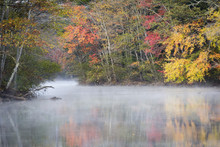 Morning Mist And Fall Colours, River Pemigewasset, New Hampshire, New England