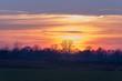 Rural landscape with row of trees at sunset. Achterhoek. Gelderl