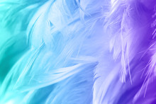 Color Trends Chicken Feather Texture Background