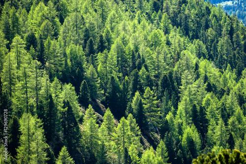 Foto auf Gartenposter Wald Spruce forest, aerial view
