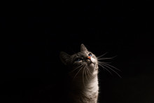 Cat In Black Background